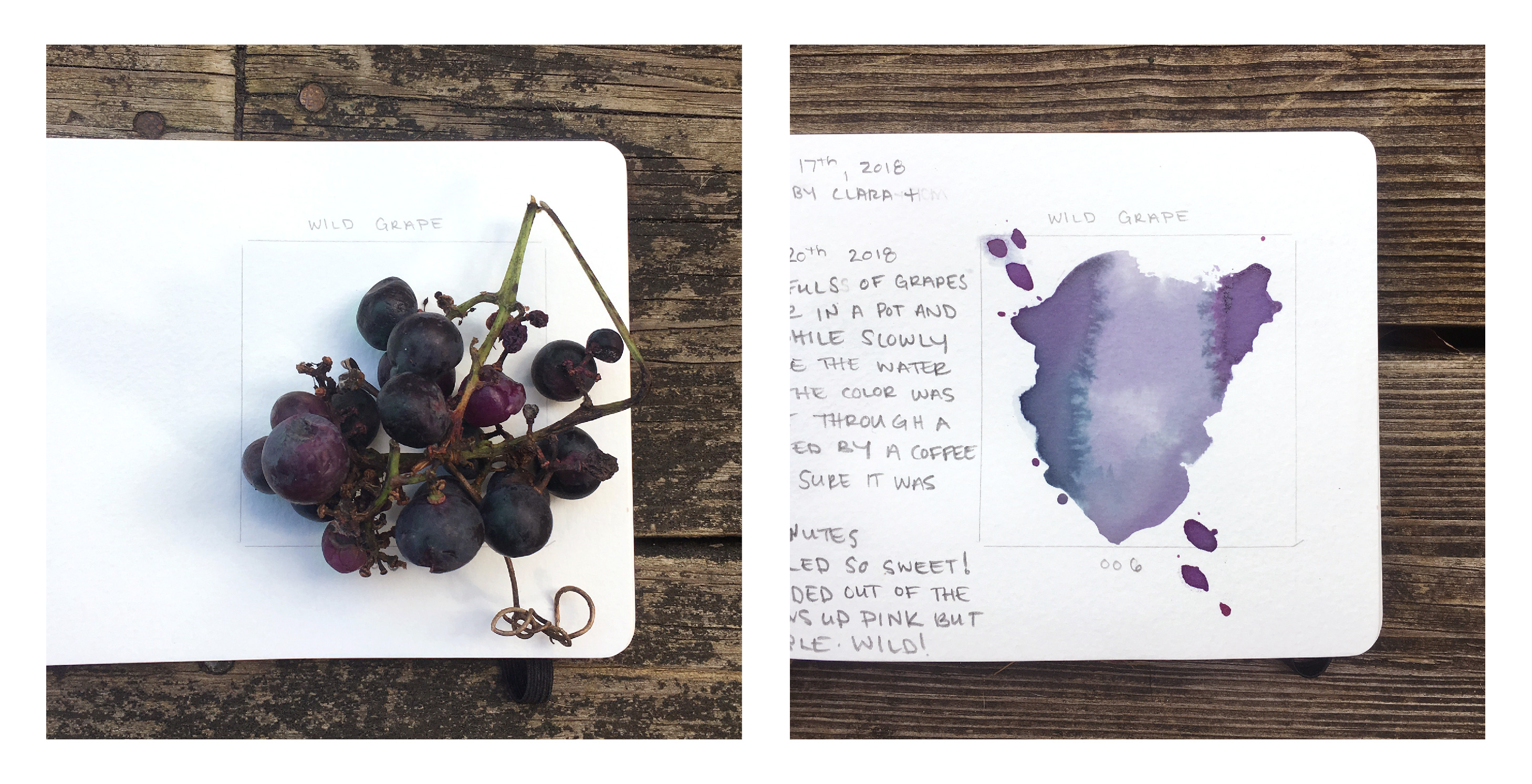 I decided to go to the Catskills and take along Jason Logan of Toronto Ink Company's book Make Ink: A Foragers Guide to Natural Ink Making. Over the next 7 days, I muddled through to create green and purple and pink and a lot of browns, a few laws of color making began to emerge.